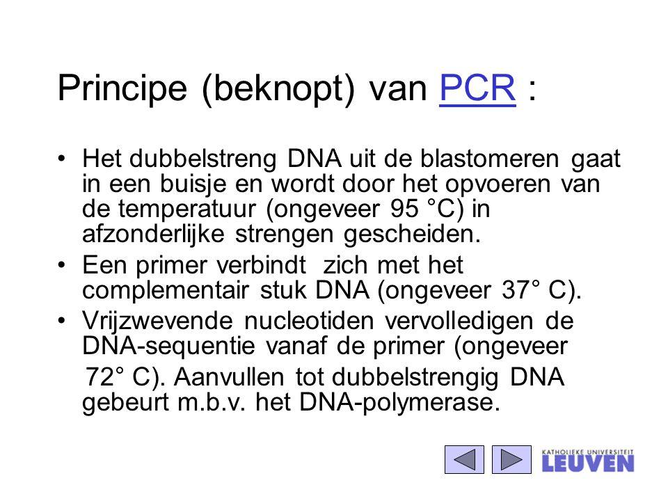 Principe (beknopt) van PCR : Het dubbelstreng DNA uit de blastomeren gaat in een buisje en wordt door het opvoeren van de temperatuur (ongeveer 95 °C)