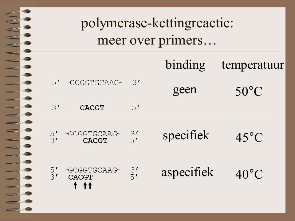 polymerase-kettingreactie: meer over primers… 5' … GCGGTGCAAG … 3' 3' CACGT 5' 45°C specifiek 3' CACGT 5' 5' … GCGGTGCAAG … 3' 40°C aspecifiek 5' … GCGGTGCAAG … 3' 3' CACGT 5' 50°C geen binding temperatuur