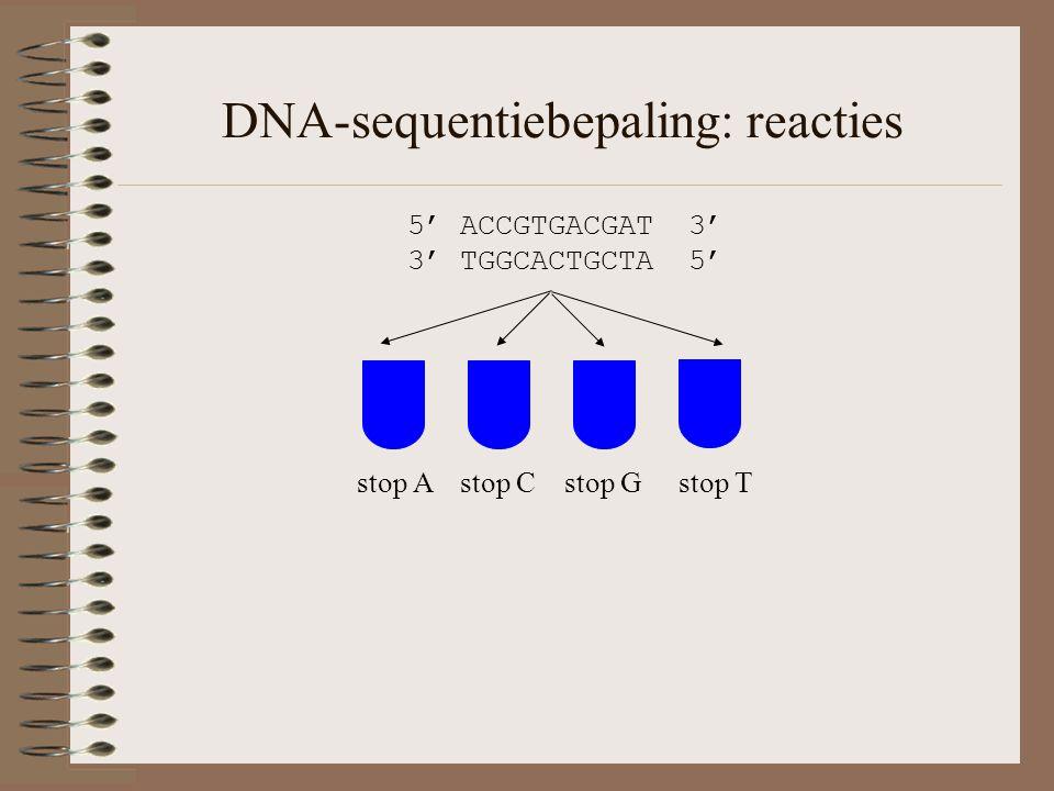 DNA-sequentiebepaling: reacties 5' ACCGTGACGAT 3' 3' TGGCACTGCTA 5' stop A stop C stop G stop T