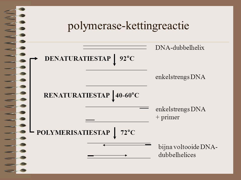 polymerase-kettingreactie DNA-dubbelhelix RENATURATIESTAP 40-60°C enkelstrengs DNA + primer DENATURATIESTAP 92°C enkelstrengs DNA POLYMERISATIESTAP 72