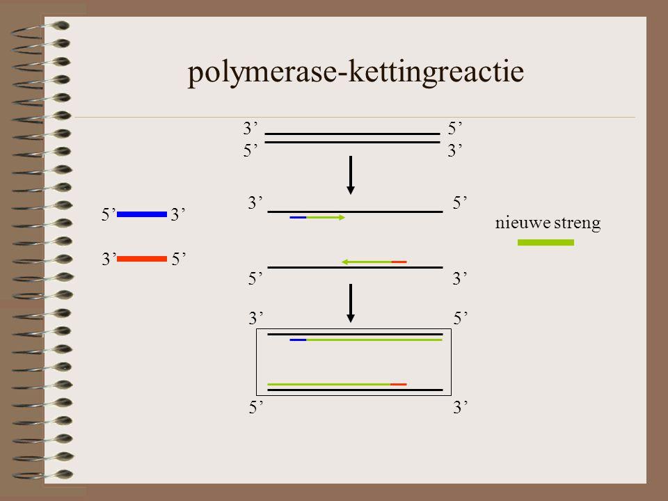polymerase-kettingreactie 5' 3' 3' 5' 5' 3' 3' 5' 5' 3' 3' 5' 5' 3' nieuwe streng