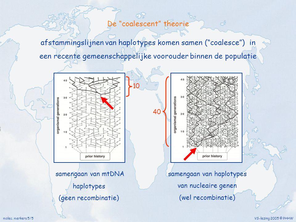 """molec. merkers 5/5 VS-lezing 2005 © PHHW samengaan van mtDNA haplotypes (geen recombinatie) afstammingslijnen van haplotypes komen samen (""""coalesce"""")"""