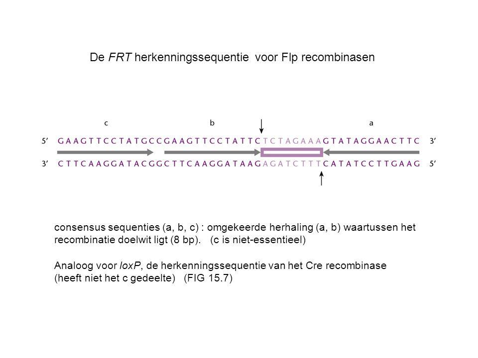 De FRT herkenningssequentie voor Flp recombinasen consensus sequenties (a, b, c) : omgekeerde herhaling (a, b) waartussen het recombinatie doelwit lig