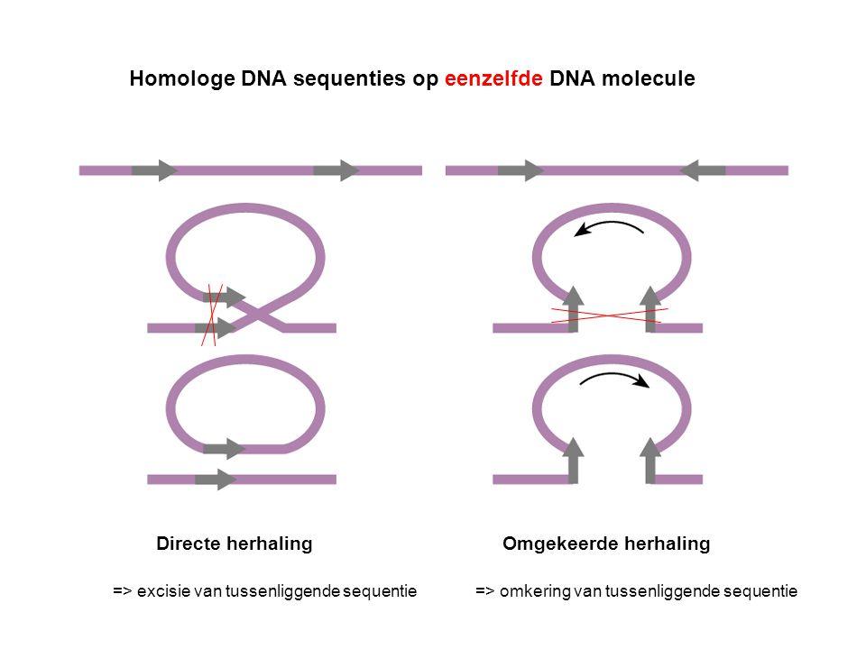 Homologe DNA sequenties op eenzelfde DNA molecule Directe herhalingOmgekeerde herhaling => excisie van tussenliggende sequentie=> omkering van tussenl
