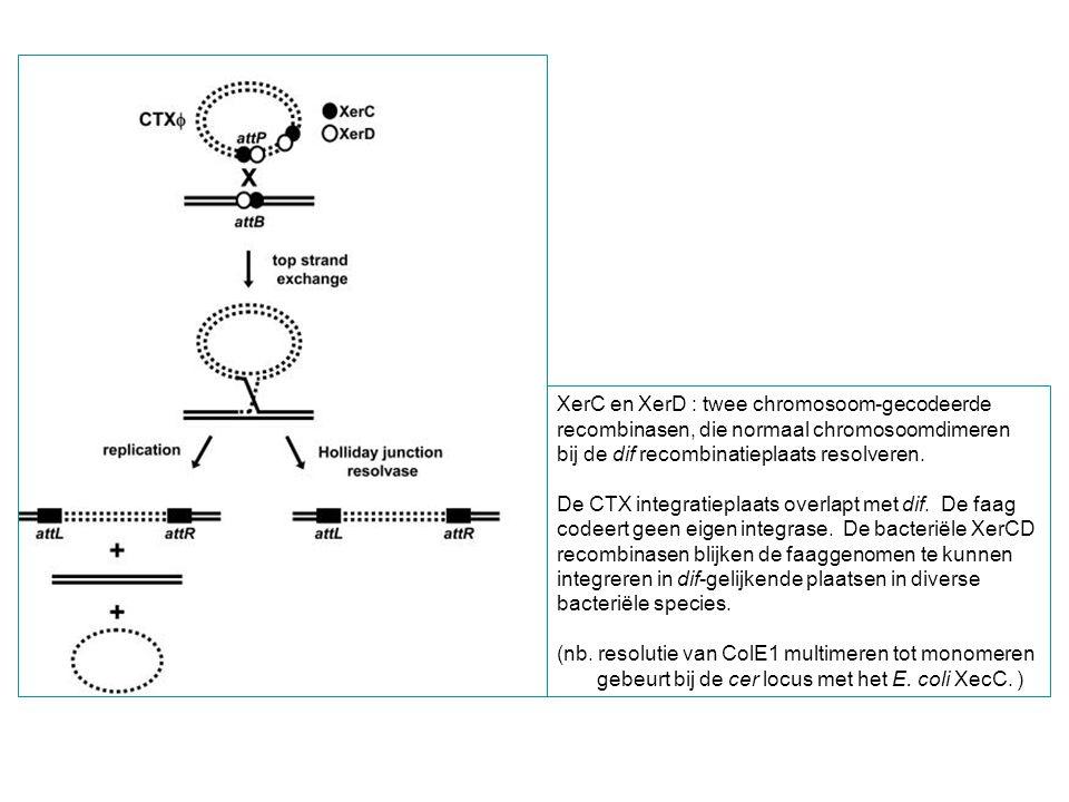 XerC en XerD : twee chromosoom-gecodeerde recombinasen, die normaal chromosoomdimeren bij de dif recombinatieplaats resolveren. De CTX integratieplaat