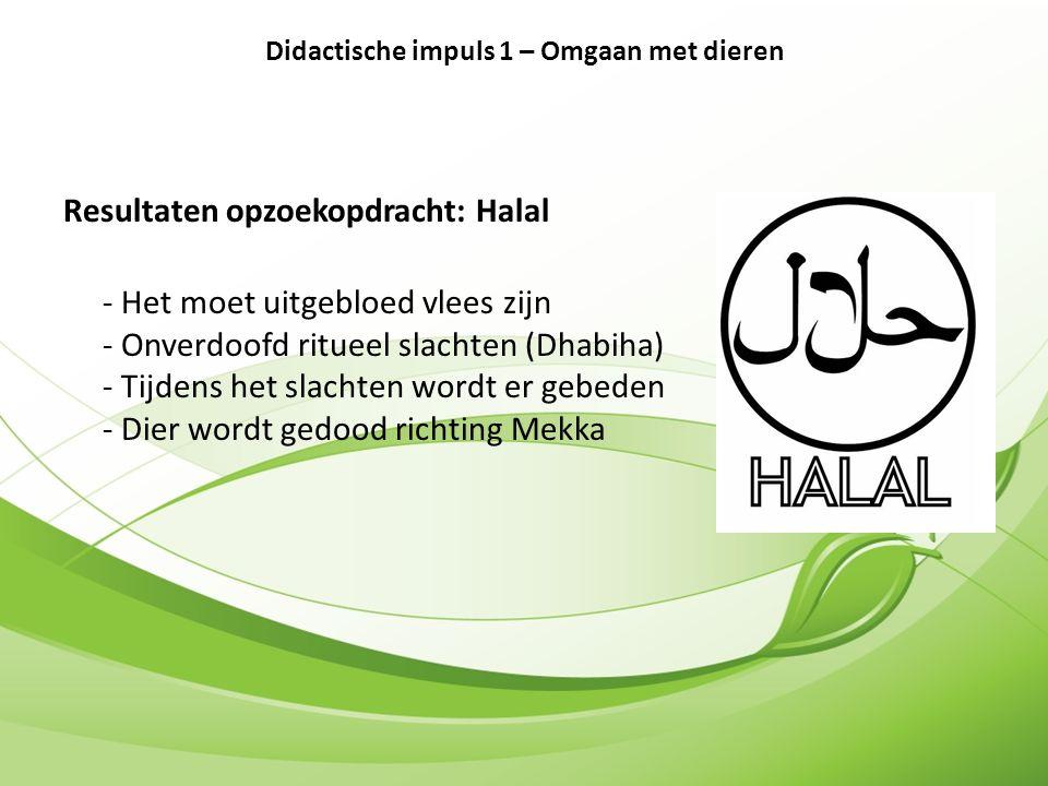 Resultaten opzoekopdracht: Halal - Het moet uitgebloed vlees zijn - Onverdoofd ritueel slachten (Dhabiha) - Tijdens het slachten wordt er gebeden - Dier wordt gedood richting Mekka Didactische impuls 1 – Omgaan met dieren