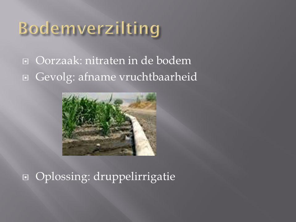  Oorzaak: nitraten in de bodem  Gevolg: afname vruchtbaarheid  Oplossing: druppelirrigatie