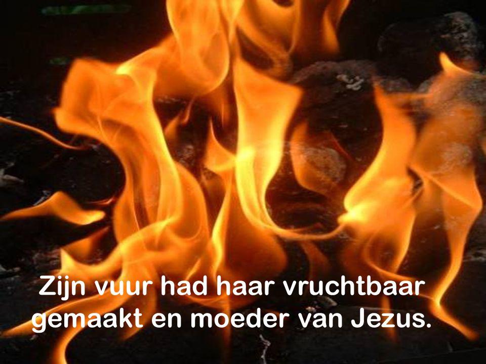De heilige Geest zal over u komen en de kracht van de Allerhoogste zal u overschaduwen. (Lucas 1,35)