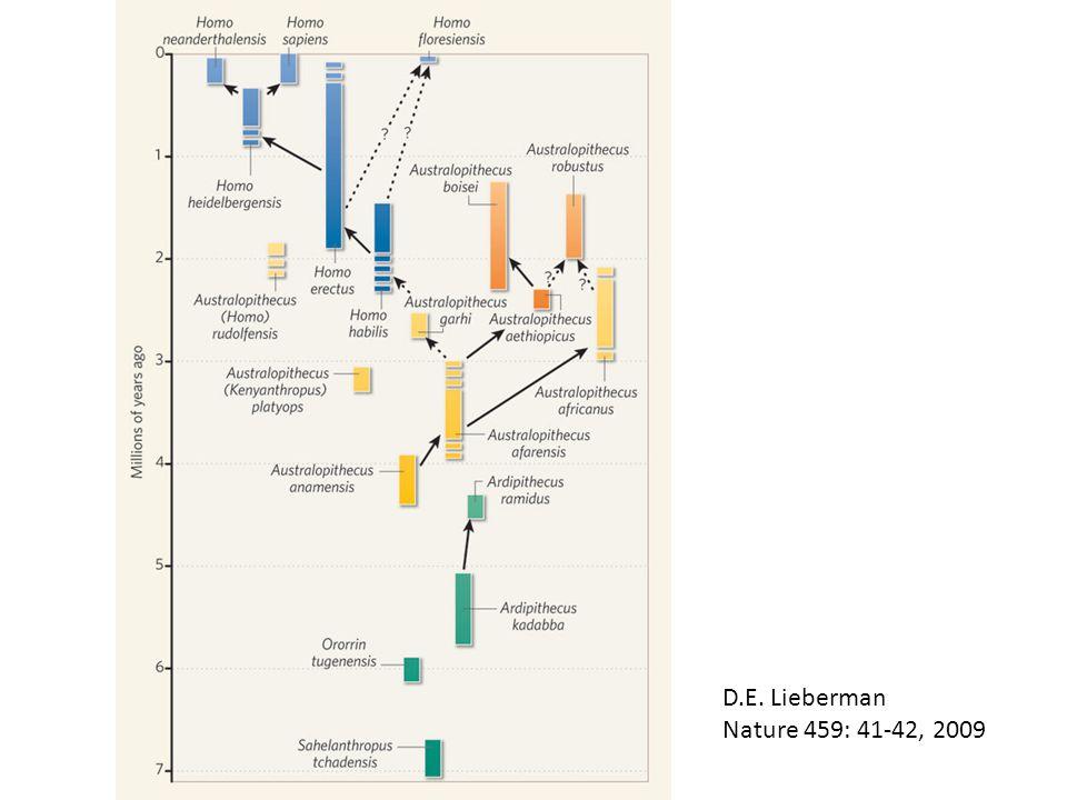 D.E. Lieberman Nature 459: 41-42, 2009