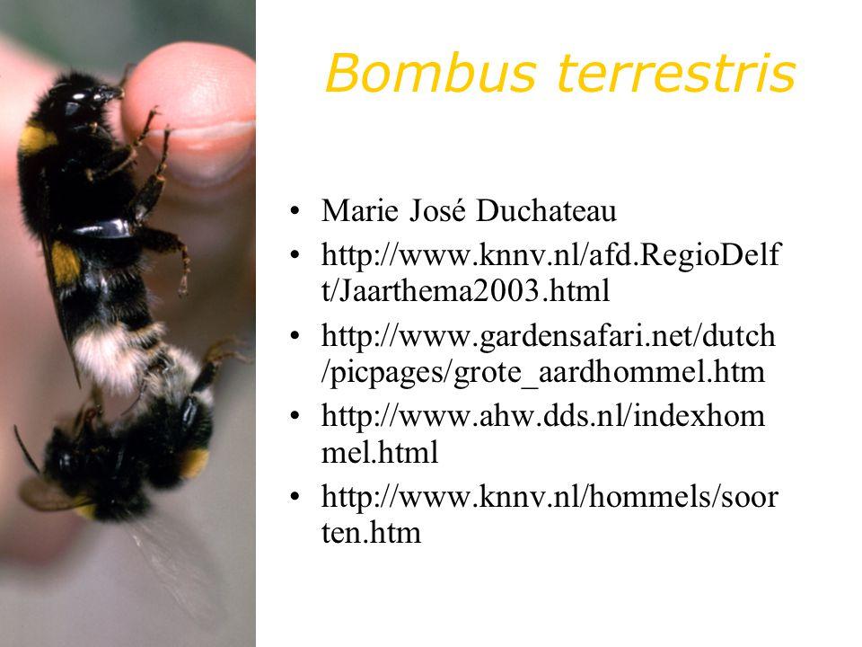 Bombus terrestris Marie José Duchateau http://www.knnv.nl/afd.RegioDelf t/Jaarthema2003.html http://www.gardensafari.net/dutch /picpages/grote_aardhommel.htm http://www.ahw.dds.nl/indexhom mel.html http://www.knnv.nl/hommels/soor ten.htm