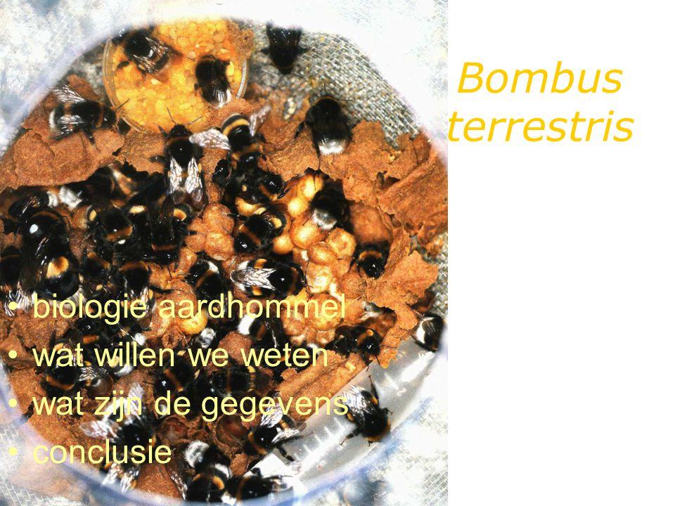 Bombus terrestris biologie aardhommel wat willen we weten wat zijn de gegevens conclusie