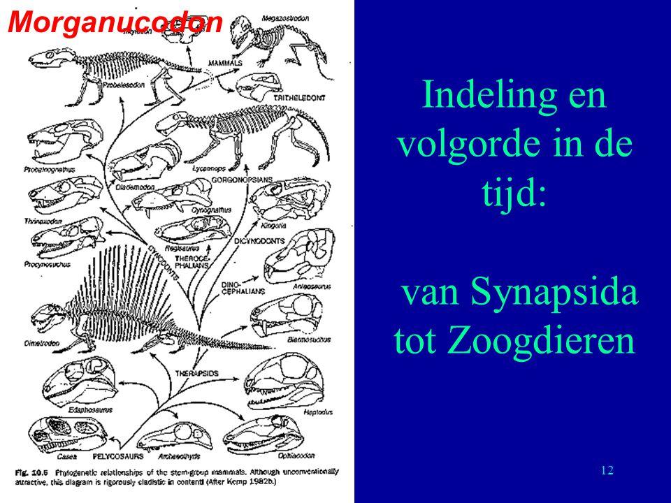 12 Indeling en volgorde in de tijd: van Synapsida tot Zoogdieren Morganucodon