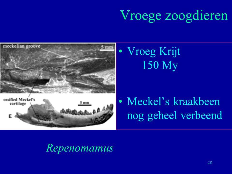 20 Vroeg Krijt 150 My Meckel's kraakbeen nog geheel verbeend Vroege zoogdieren Repenomamus
