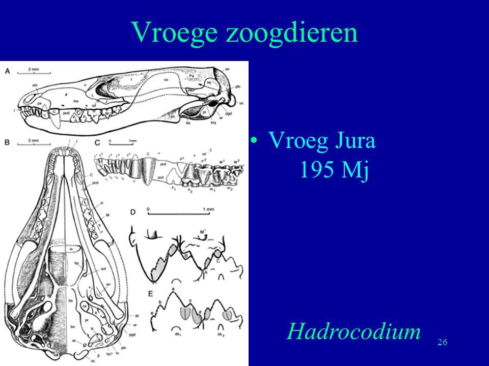 26 Vroeg Jura 195 Mj Vroege zoogdieren Hadrocodium