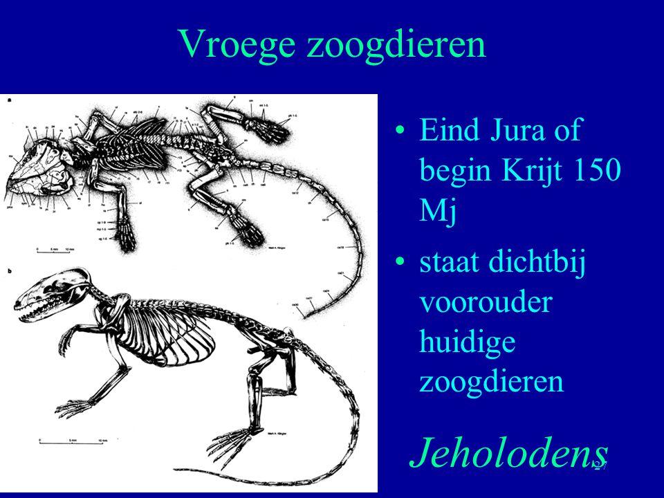 27 Eind Jura of begin Krijt 150 Mj staat dichtbij voorouder huidige zoogdieren Vroege zoogdieren Jeholodens