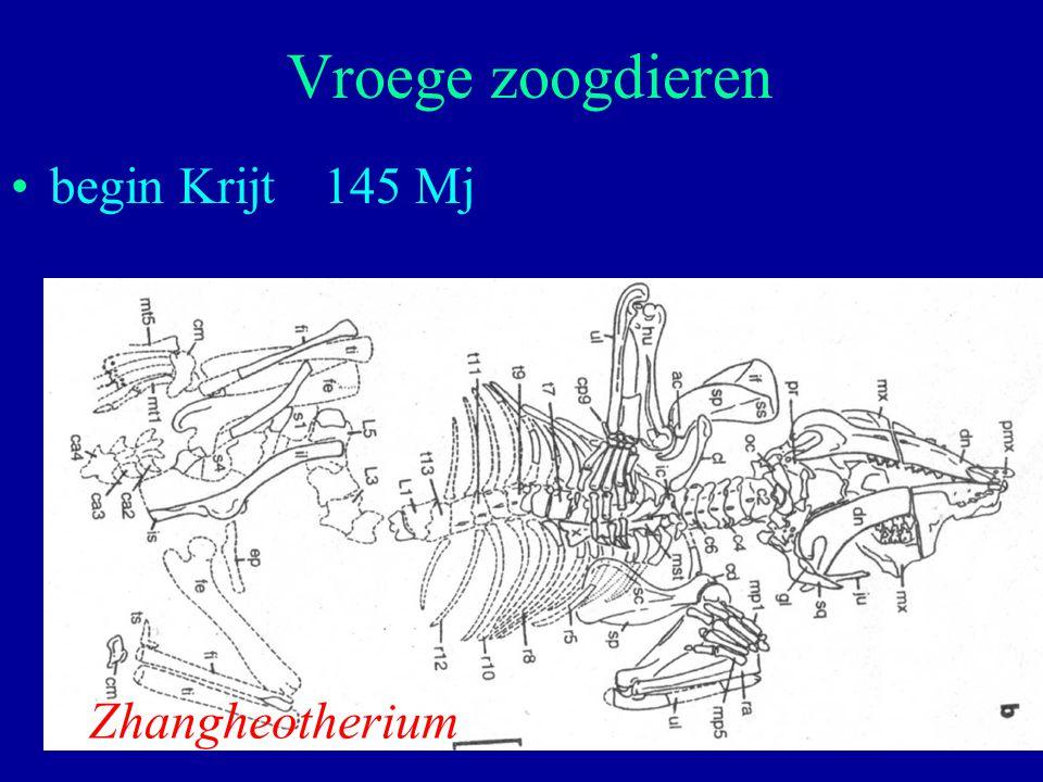 28 begin Krijt145 Mj Vroege zoogdieren Zhangheotherium