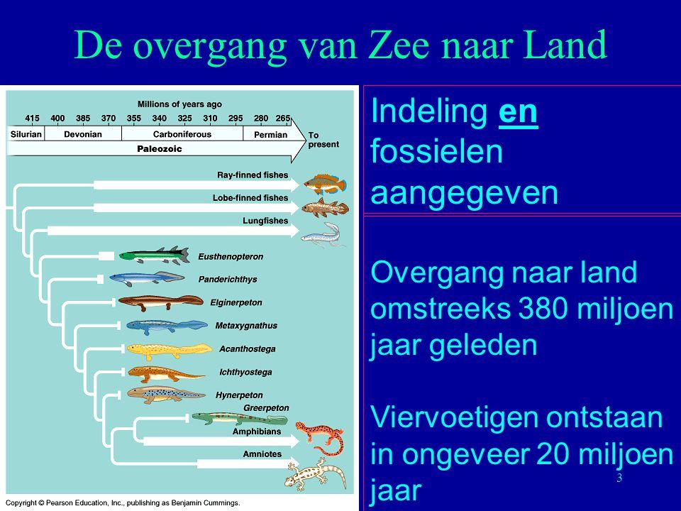 3 De overgang van Zee naar Land Indeling en fossielen aangegeven Overgang naar land omstreeks 380 miljoen jaar geleden Viervoetigen ontstaan in ongeve