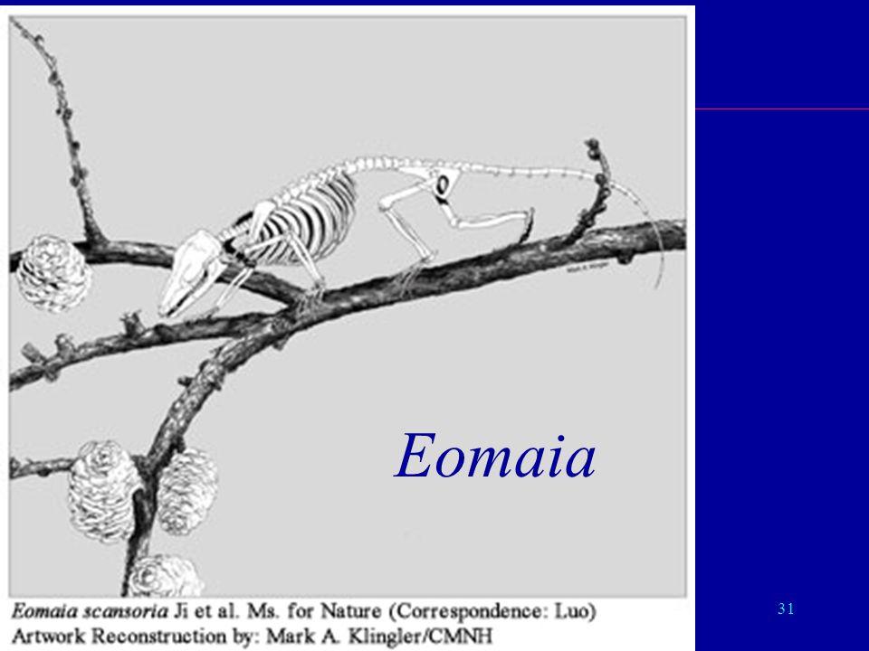 31 Eutheria Eomaia