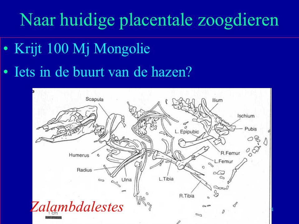 34 Krijt 100 Mj Mongolie Iets in de buurt van de hazen? Naar huidige placentale zoogdieren Zalambdalestes