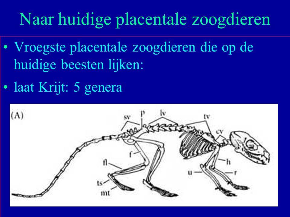 35 Vroegste placentale zoogdieren die op de huidige beesten lijken: laat Krijt: 5 genera Naar huidige placentale zoogdieren