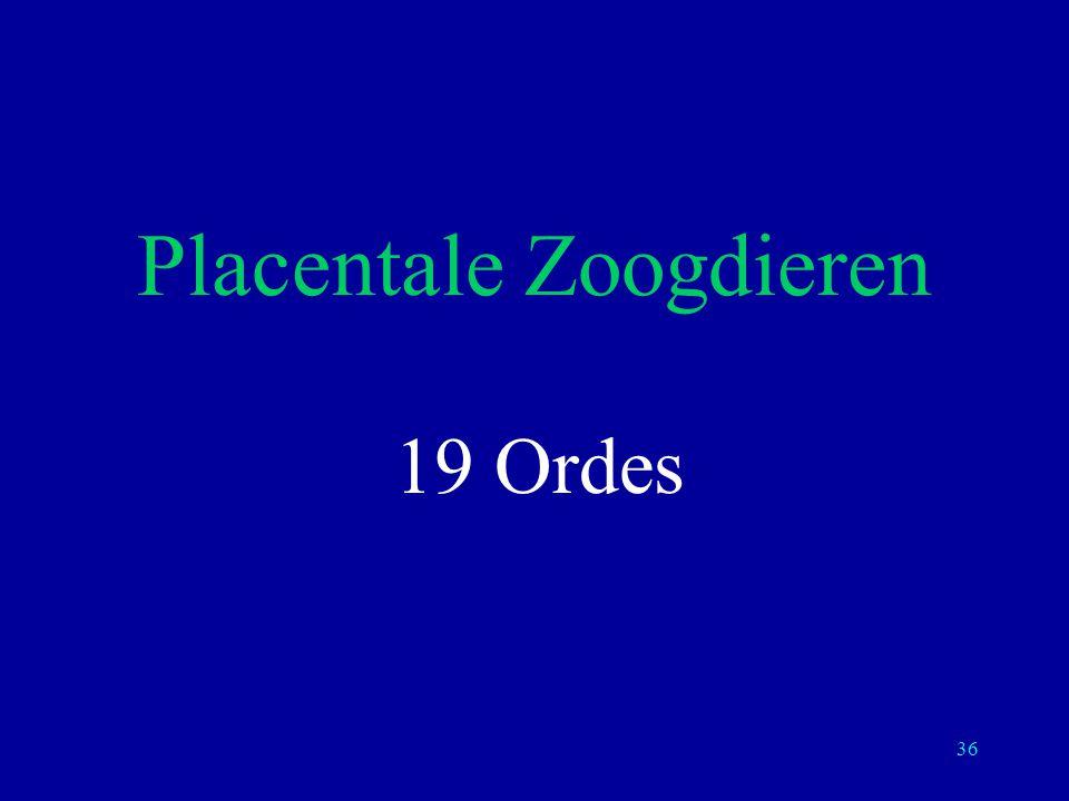 36 Placentale Zoogdieren 19 Ordes