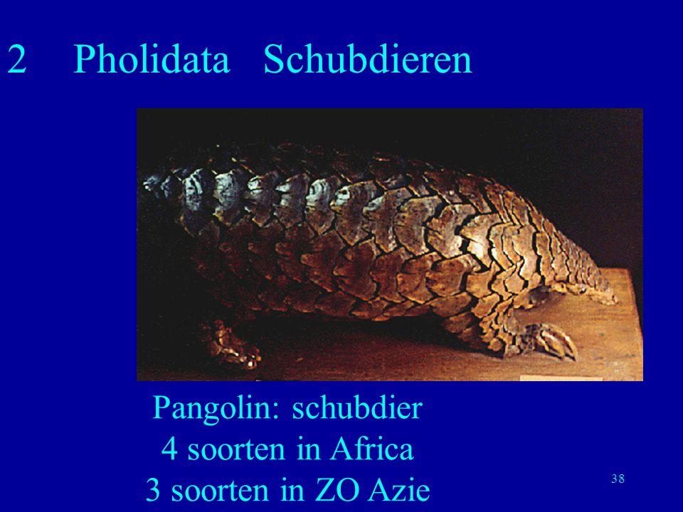 38 2Pholidata Schubdieren Pangolin: schubdier 4 soorten in Africa 3 soorten in ZO Azie