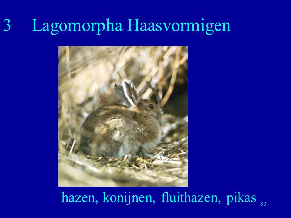39 3Lagomorpha Haasvormigen hazen, konijnen, fluithazen, pikas