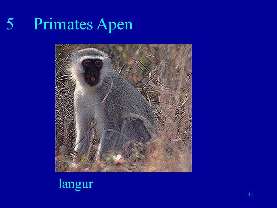 41 5Primates Apen langur