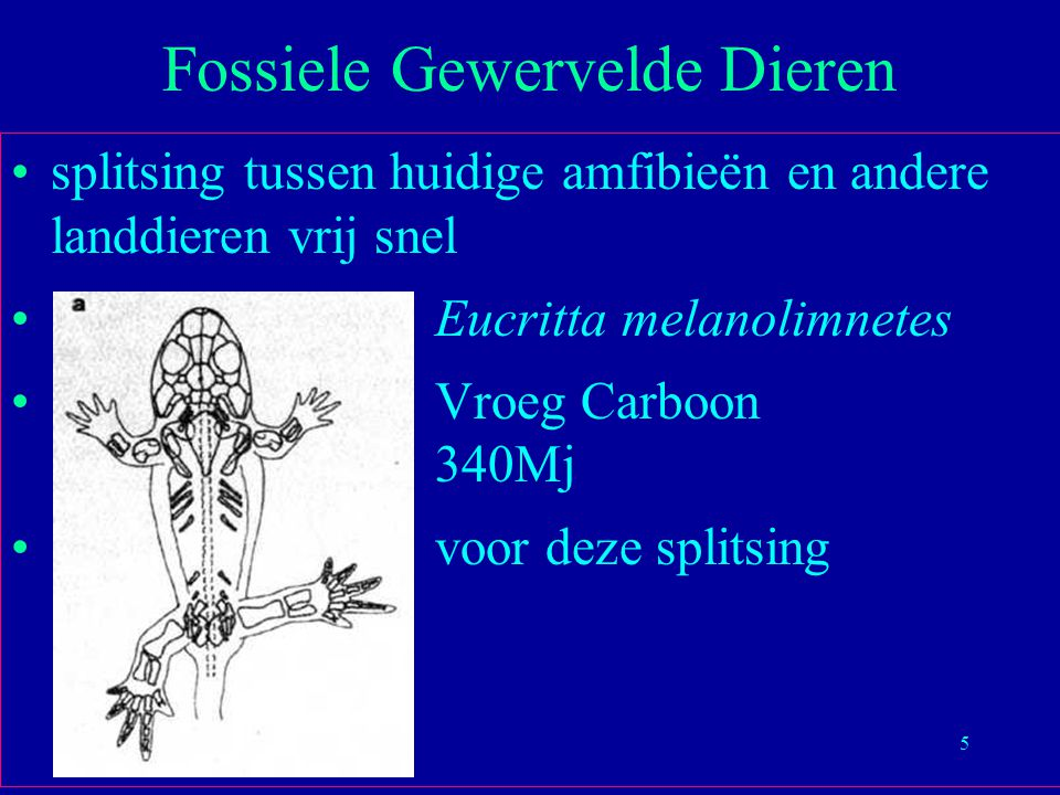 66 Science 14 December 2001 16397 base pairs 19 nucleaire, 3 mitochondriale gen sequenties Moleculaire Zoogdieren