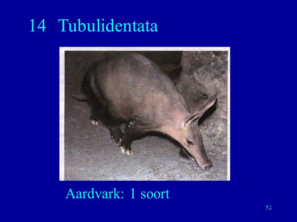 52 14Tubulidentata Aardvark: 1 soort