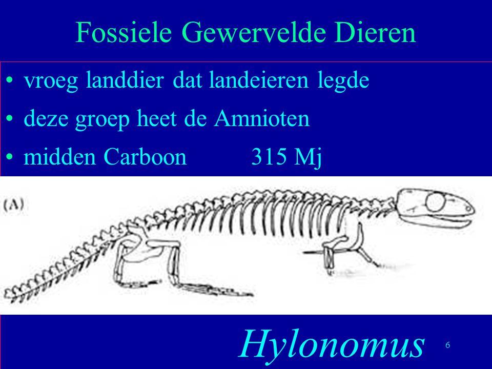 6 vroeg landdier dat landeieren legde deze groep heet de Amnioten midden Carboon315 Mj Fossiele Gewervelde Dieren Hylonomus