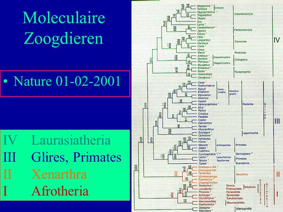 60 Nature 01-02-2001 Moleculaire Zoogdieren IVLaurasiatheria IIIGlires, Primates IIXenarthra IAfrotheria