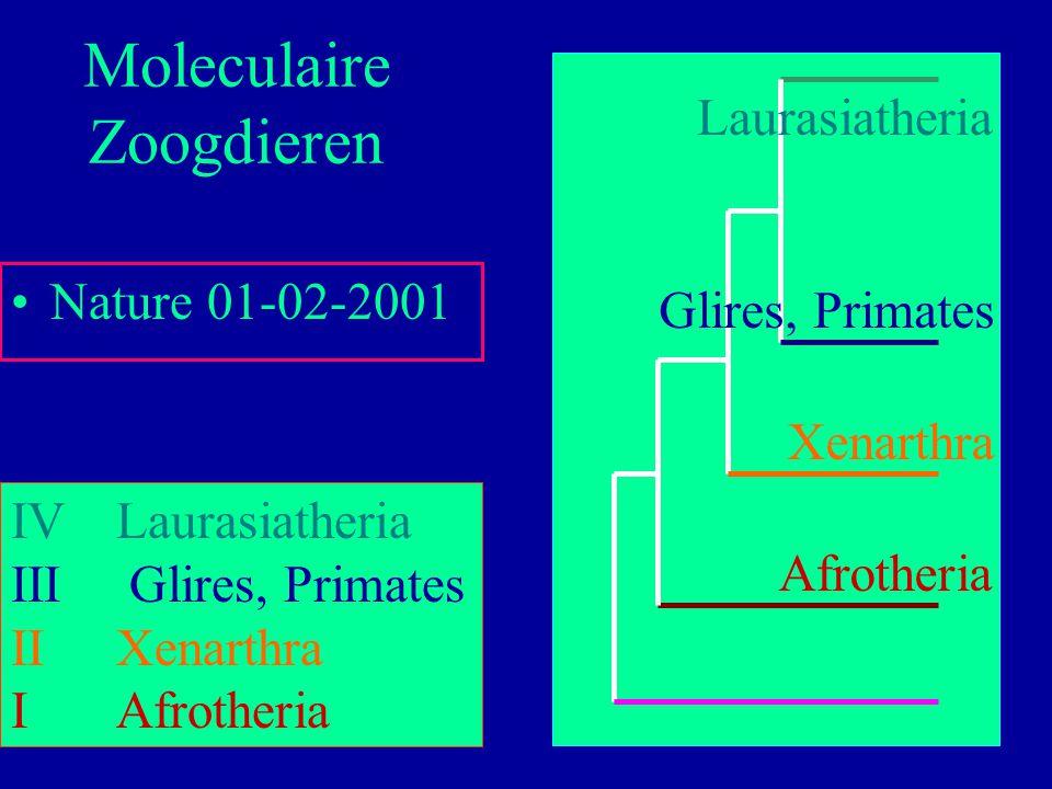 61 Nature 01-02-2001 Moleculaire Zoogdieren IVLaurasiatheria III Glires, Primates IIXenarthra IAfrotheria Afrotheria Xenarthra Glires, Primates Lauras