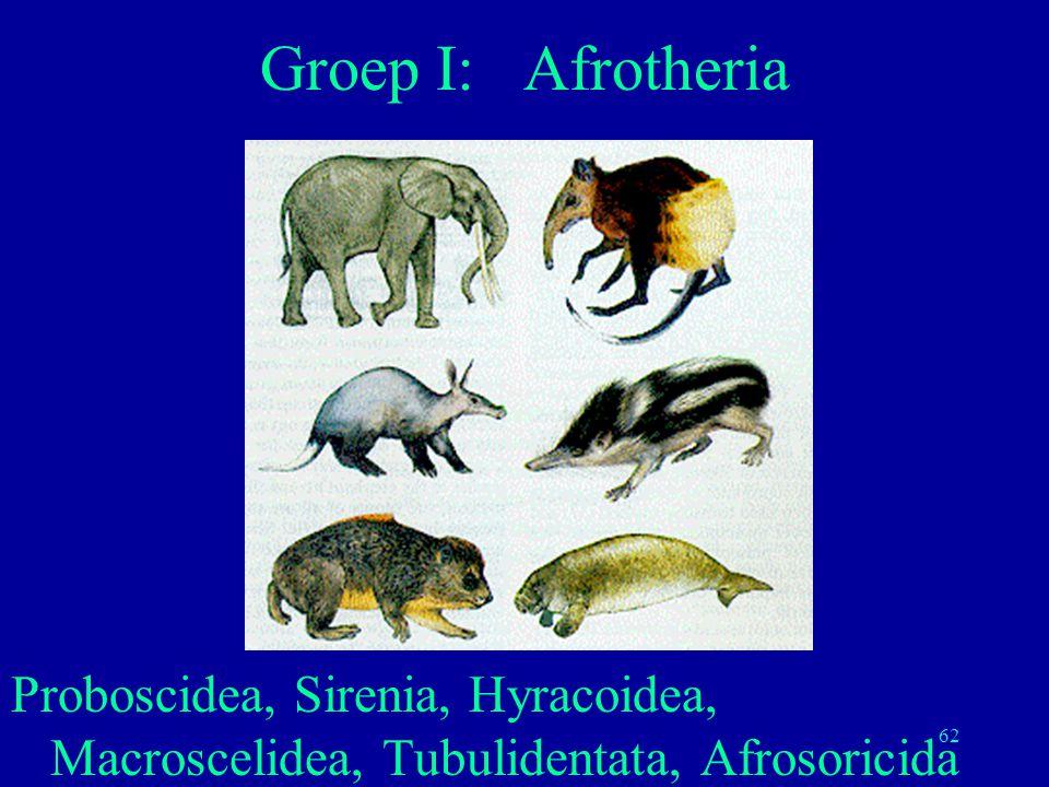 62 Proboscidea, Sirenia, Hyracoidea, Macroscelidea, Tubulidentata, Afrosoricida Groep I: Afrotheria