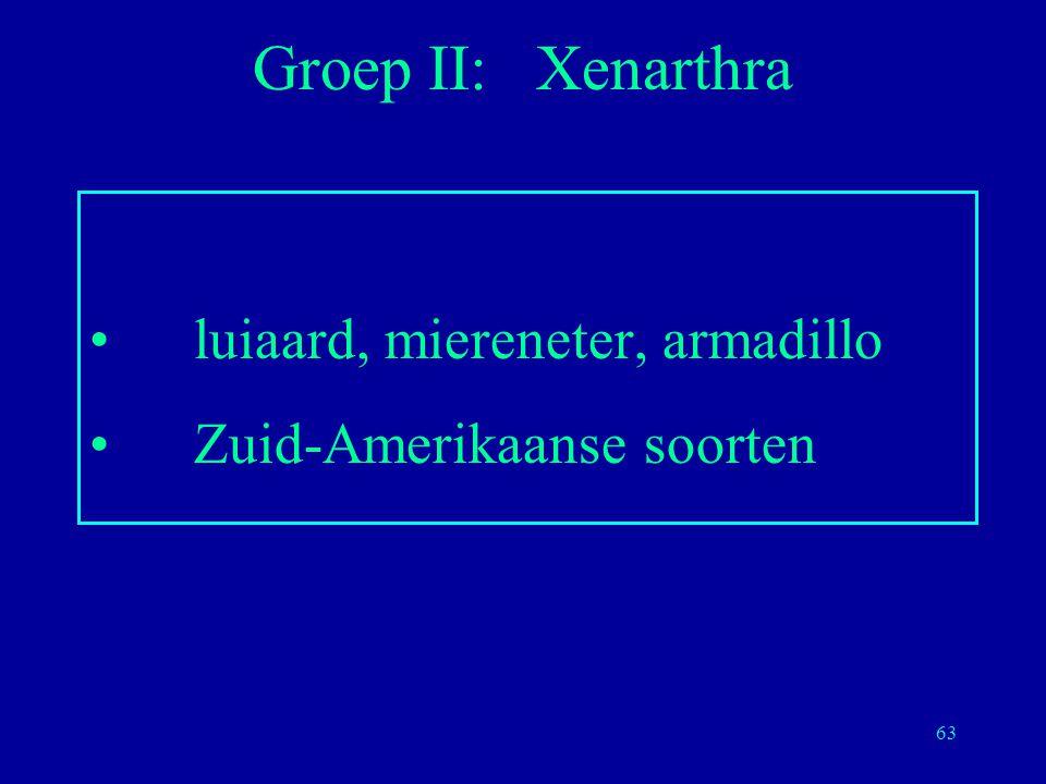 63 luiaard, miereneter, armadillo Zuid-Amerikaanse soorten Groep II: Xenarthra