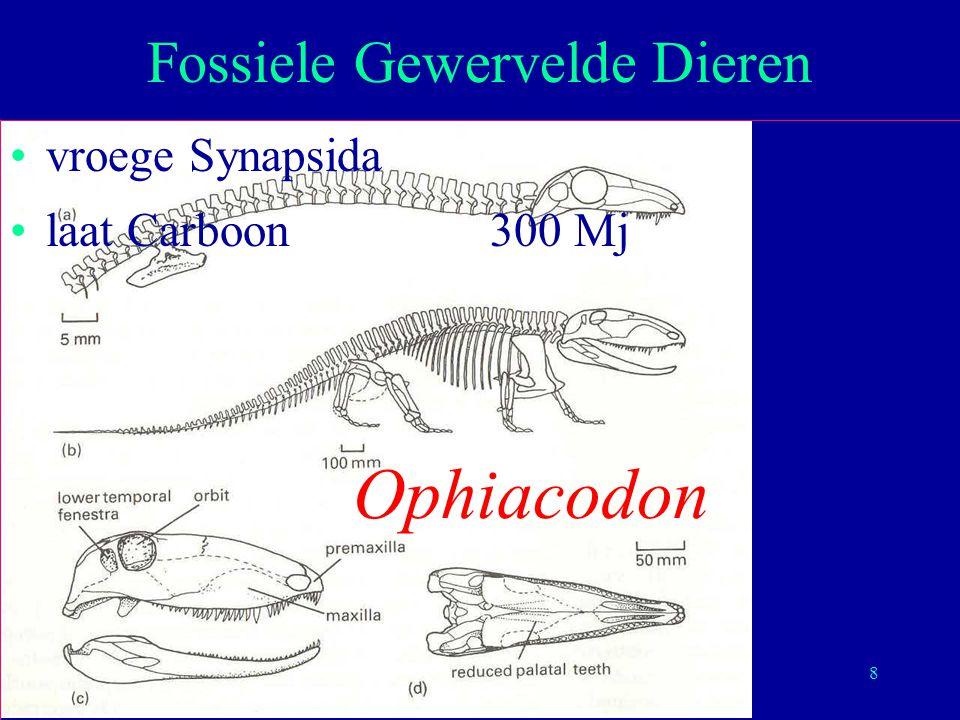 8 vroege Synapsida laat Carboon300 Mj Fossiele Gewervelde Dieren Ophiacodon