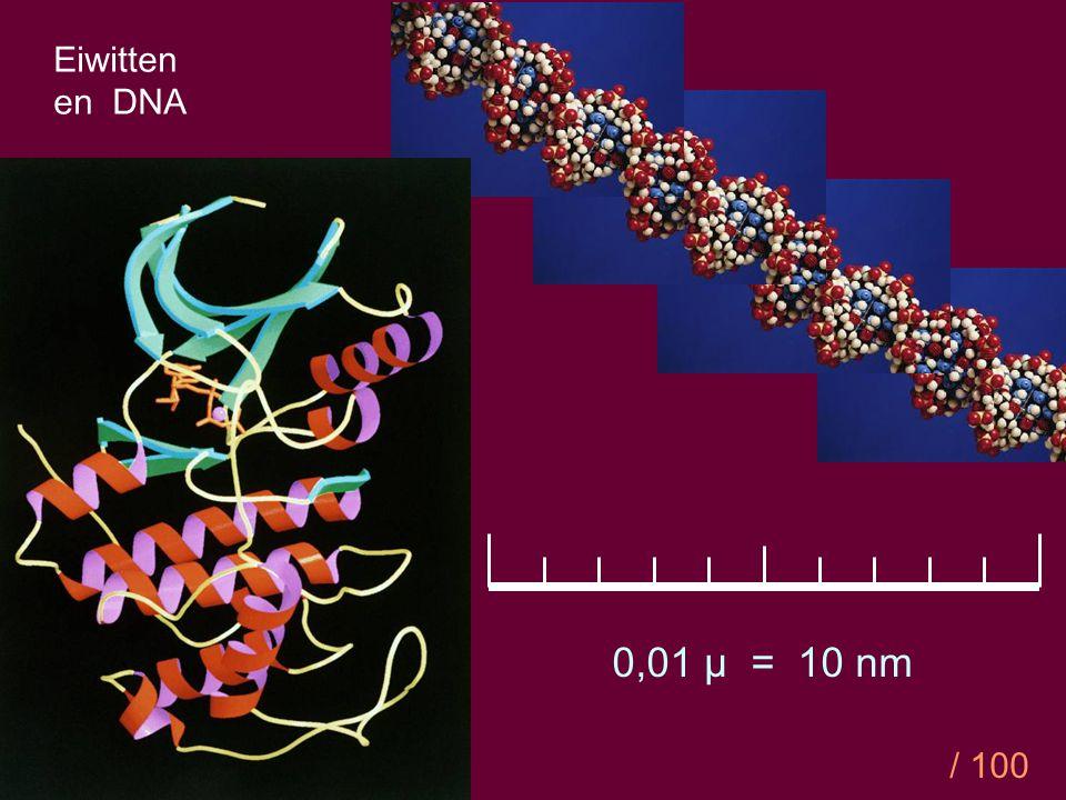 Eiwitten en DNA 0,01 µ = 10 nm / 100