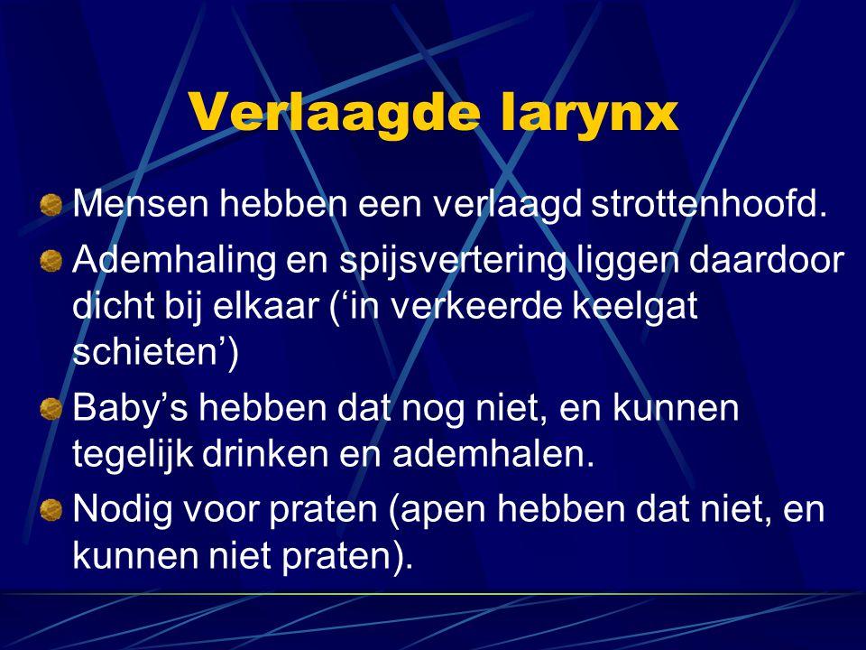 Verlaagde larynx Mensen hebben een verlaagd strottenhoofd. Ademhaling en spijsvertering liggen daardoor dicht bij elkaar ('in verkeerde keelgat schiet