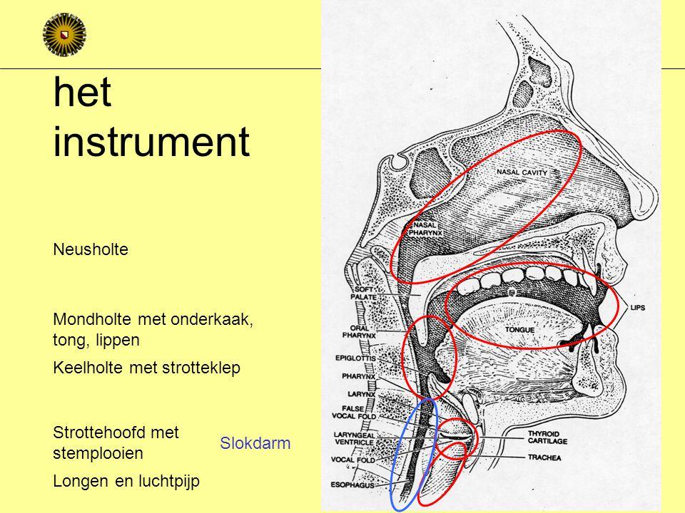 Taal en de menselijke natuur Fonetiek hoe maken we spraakklanken.