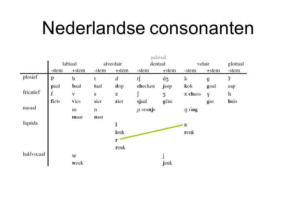 Nederlandse consonanten palataal