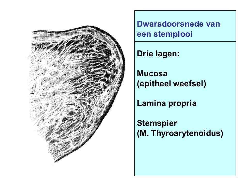 Dwarsdoorsnede van een stemplooi Drie lagen: Mucosa (epitheel weefsel) Lamina propria Stemspier (M. Thyroarytenoidus)