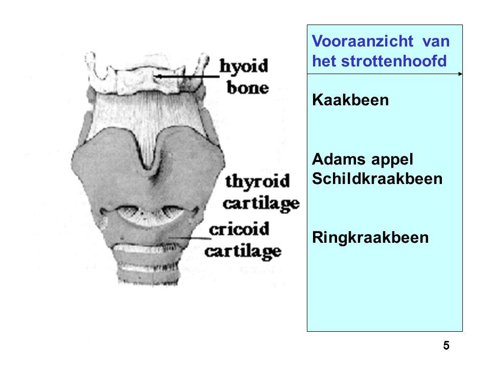 4 Anatomie van het strottenhoofd en de werking van de stemplooien