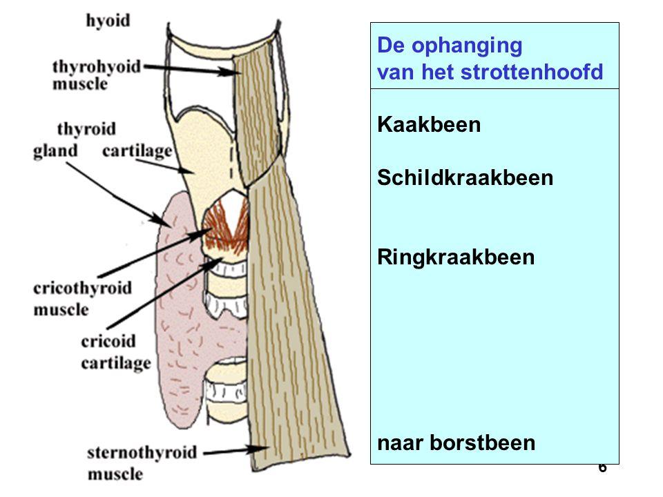5 Vooraanzicht van het strottenhoofd Kaakbeen Adams appel Schildkraakbeen Ringkraakbeen