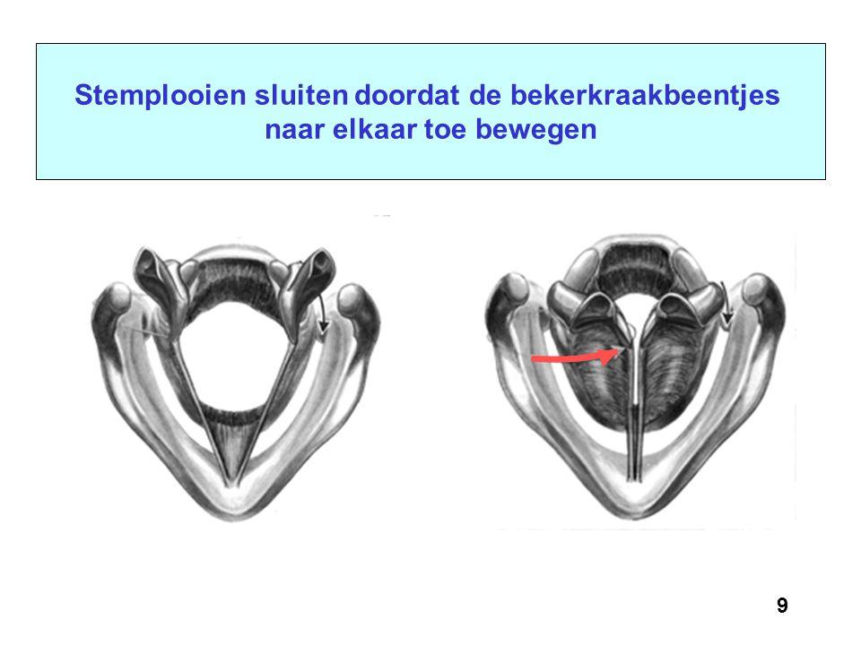 8 Bovenaanzicht van het strottenhoofd met belangrijke stemspieren of bekerkraakbeentjes of stemspier