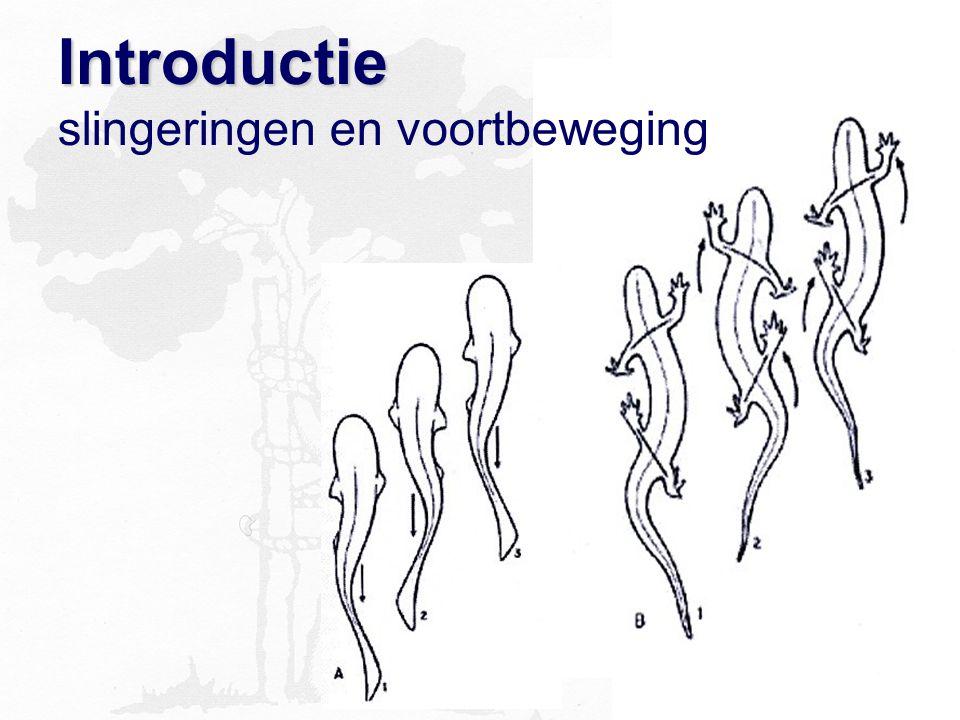 Introductie Introductie slingeringen en voortbeweging