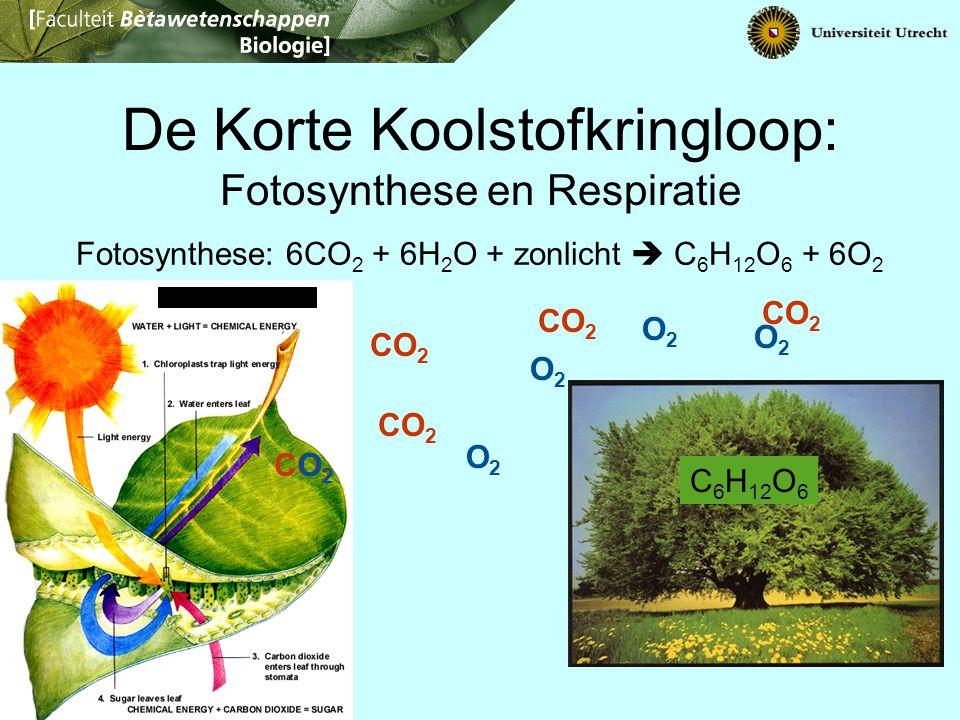 De Korte Koolstofkringloop: Fotosynthese en Respiratie Fotosynthese: 6CO 2 + 6H 2 O + zonlicht  C 6 H 12 O 6 + 6O 2 CO 2 O2O2 O2O2 O2O2 O2O2 O2O2 C 6