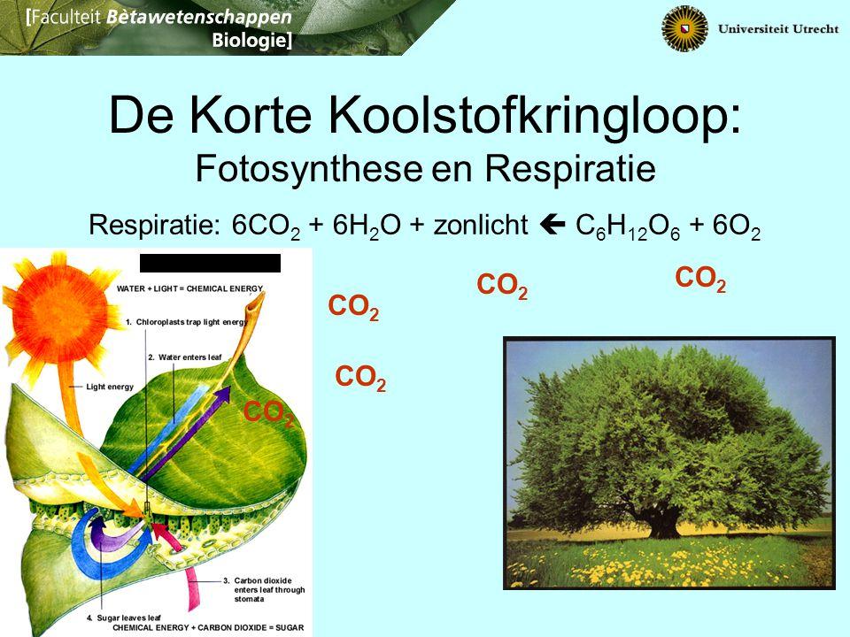 De Korte Koolstofkringloop: Fotosynthese en Respiratie Respiratie: 6CO 2 + 6H 2 O + zonlicht  C 6 H 12 O 6 + 6O 2 CO 2
