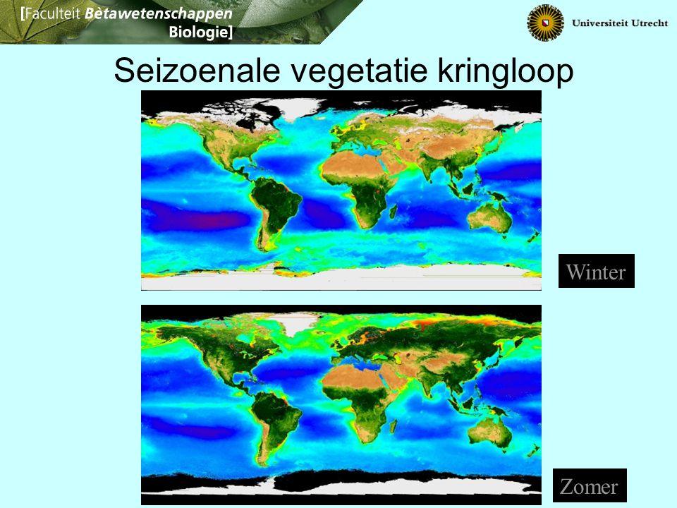 Seizoenale vegetatie kringloop Winter Zomer