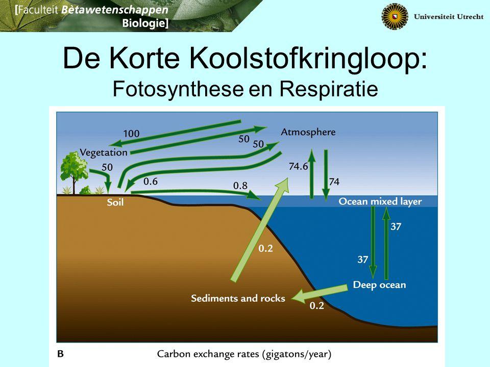 De Korte Koolstofkringloop: Fotosynthese en Respiratie
