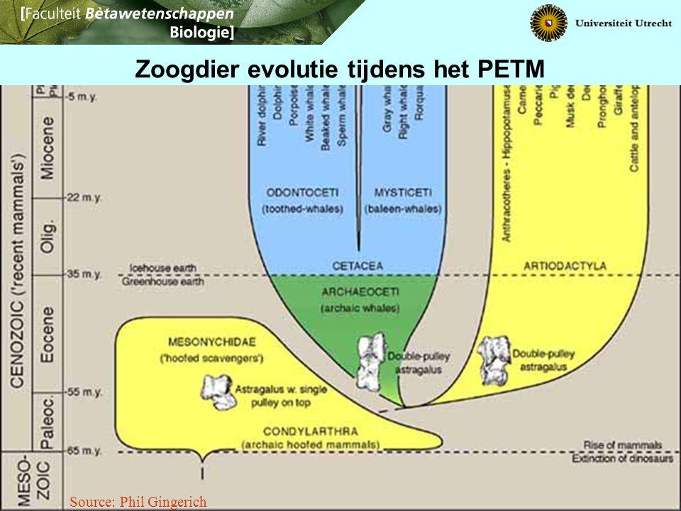 Source: Phil Gingerich Zoogdier evolutie tijdens het PETM